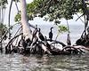 Birds In Belize near the Barrier Reef