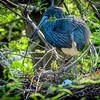Nest Repairs
