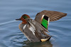 Birds, Birds & More Birds : I hope you love birds too. 