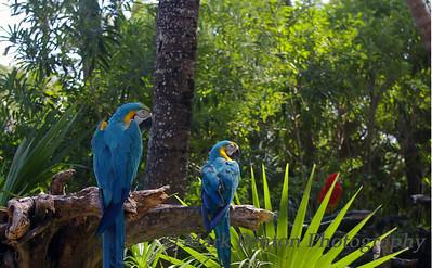 Peering Parrots