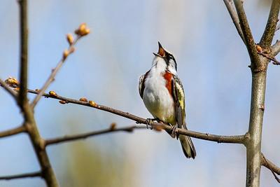 Just Singing Away