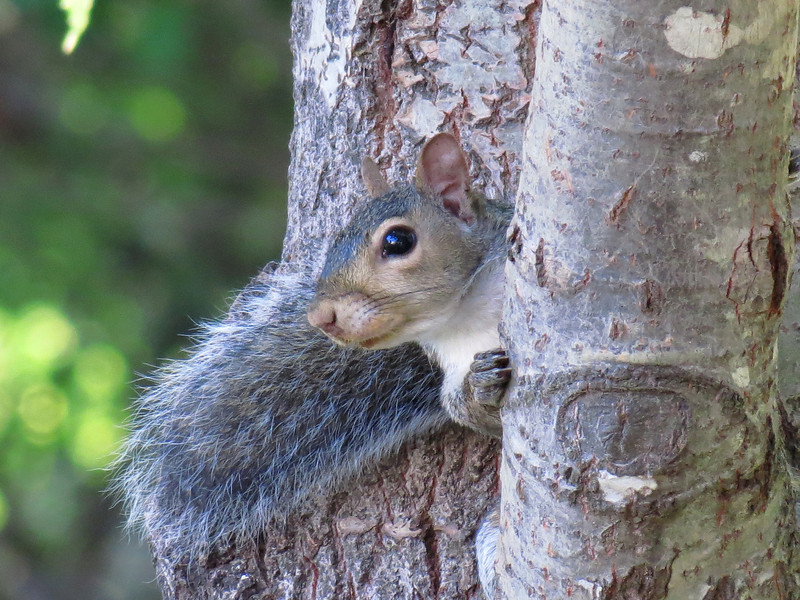Squirrel peeking at me.