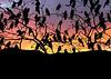 Blackbirds at Sunset