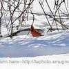 2-16-14 birds_0757