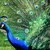 """Pretty Bird"""
