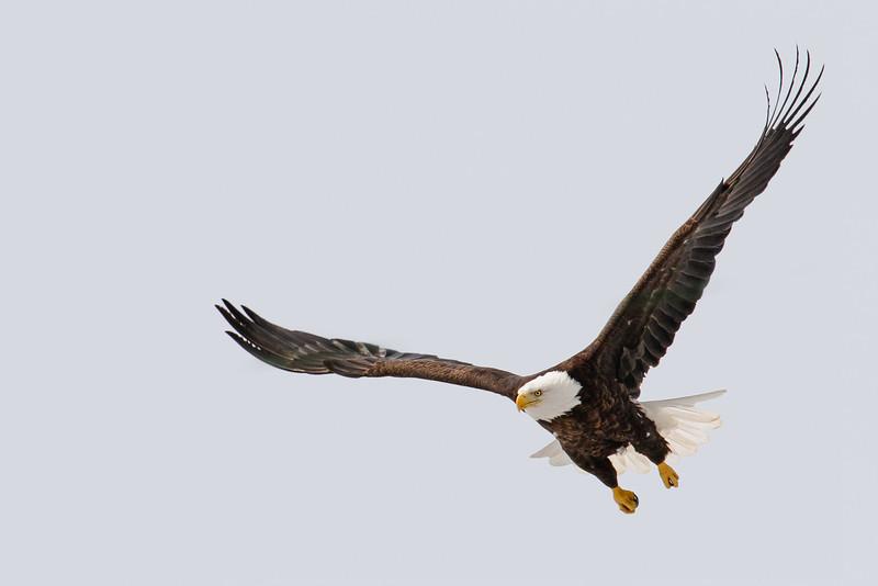 Fly Like an Eagle 2