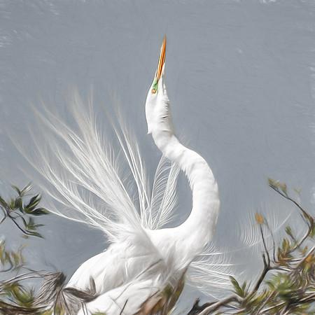 'Male Egret Dance'