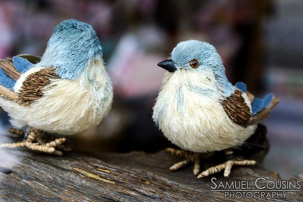 Birds in a window display
