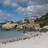 African Penguins beach stroll.