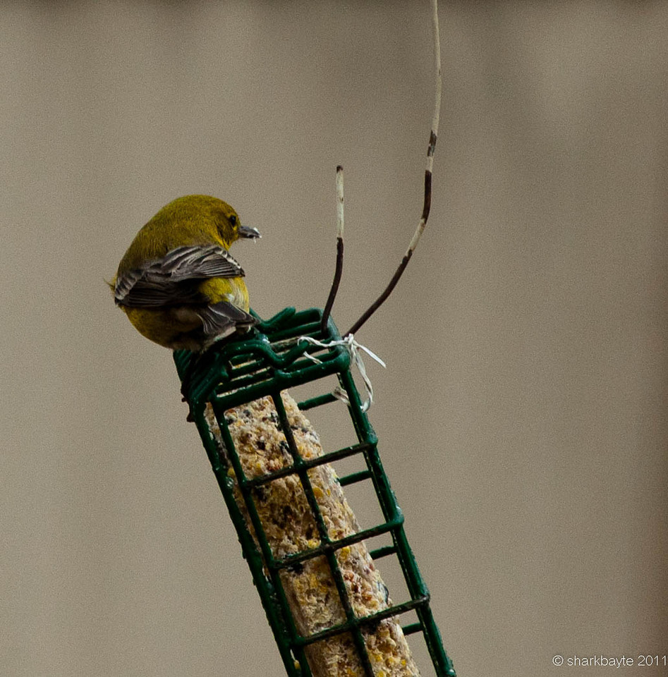 I need to get a feeder for my yard so I can get closer shots.