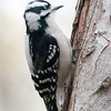 071111_2011_12_7_Jackson_Birds-30_Web