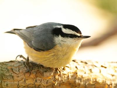 A Nut Hatch