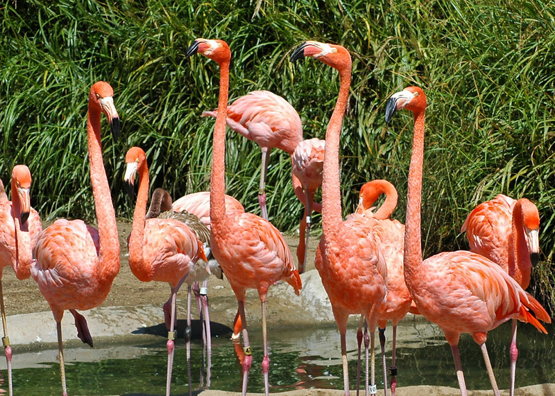 Flamingo Choir