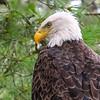 An Eagle Eye's View   1