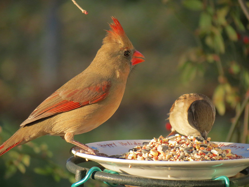 Good friends sharing their evening meal.