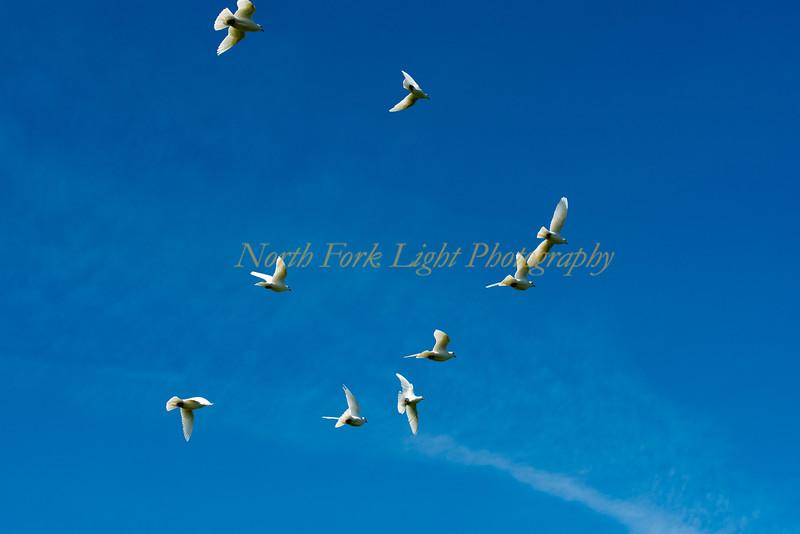 Dove Squadron