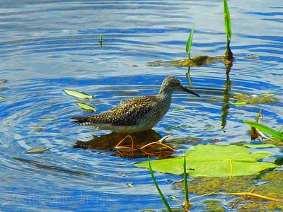 Water Bird Looking For Food