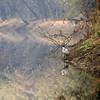 Little Egret (Egretta garzetta)<br /> Bharatpur, India<br /> IUCN Status: Least Concern