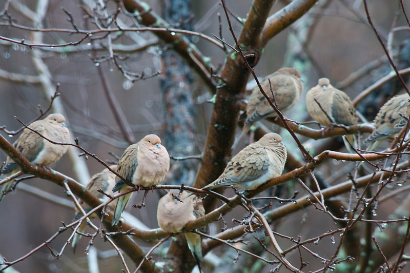 Birds of a Feather Huddled Together