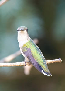birds-51