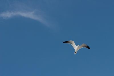 Gull and Wisp, Honeymoon Island, FL 600 pix-2052
