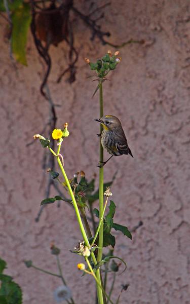 20100114c - Birds