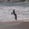 Seal Beach Pier - 21 Feb 2011