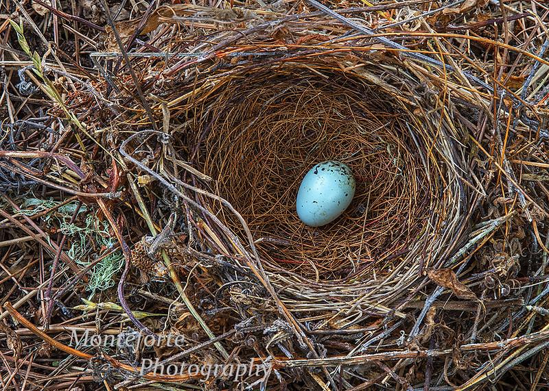 Birds nest with egg