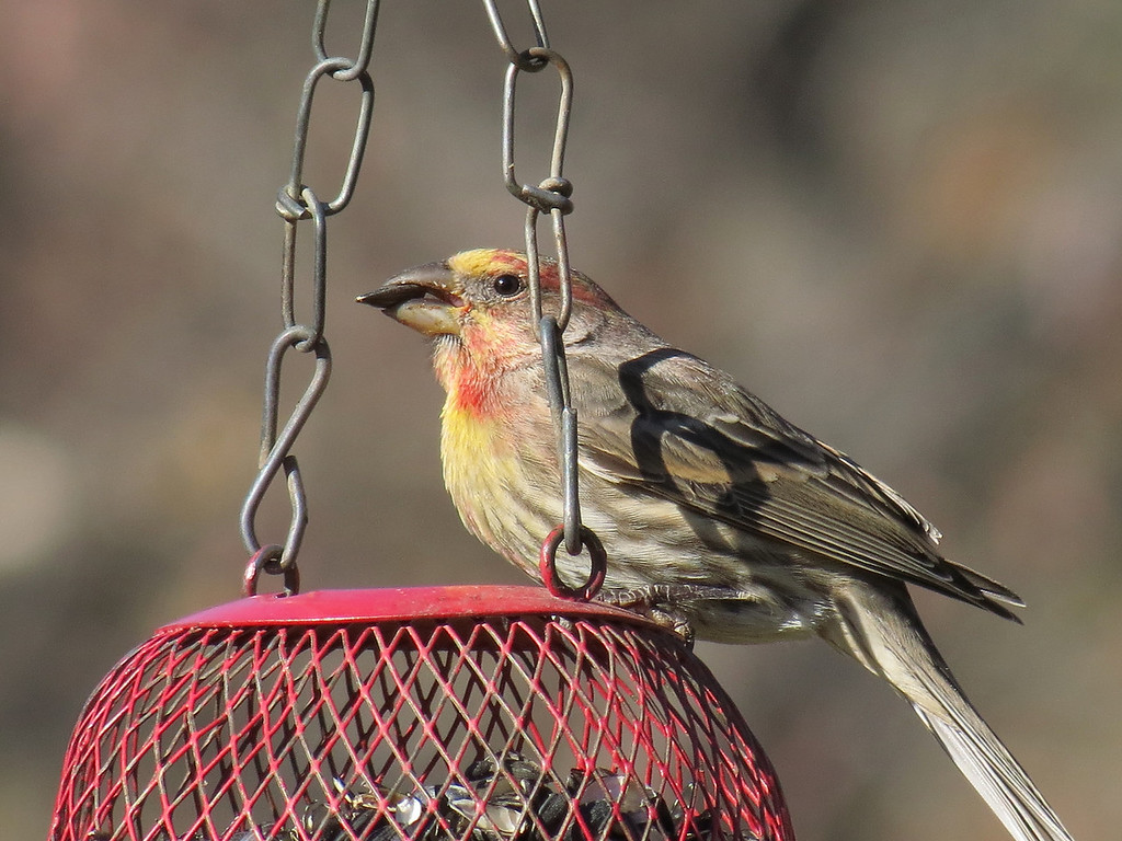 Finch on December 18, 2012.
