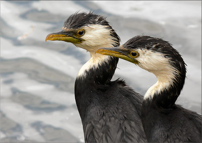 On the lookout/shags