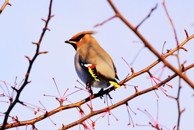 Bird On A Stick,
