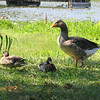 "<a href=""http://xenogere.com/duck-duck-goose/"" title=""Duck duck goose"">Blog entry</a>"
