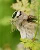 A Damsel Fly feast.