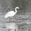 This Egret was fishing, but it was also being shot by a 600m lens... :)