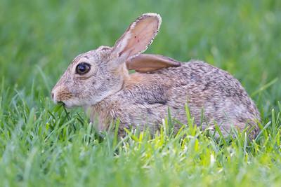 De Bunny 2