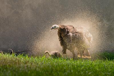 Dirt Bath Shake