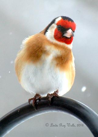 Birds Who Entertain