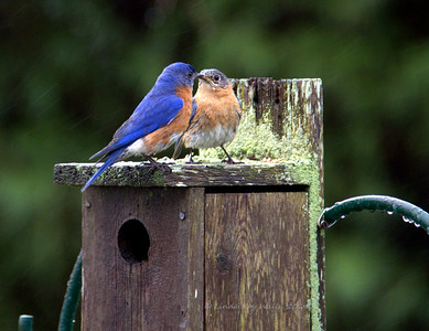 When Bluebirds Kiss