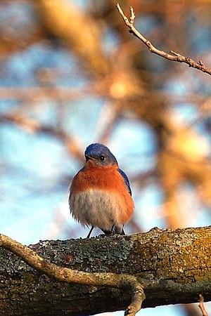 Bluebird of Unhappiness