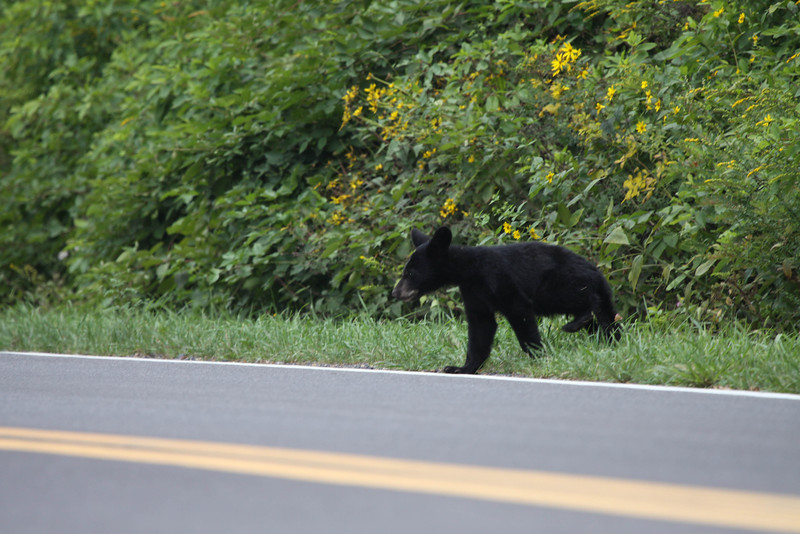 Little Bear-2