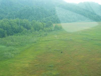 Black Bear in SW Alaska