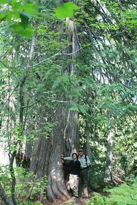 Old growth Cedar British Columbia CA
