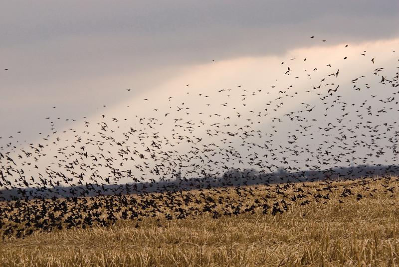 Flock (2)