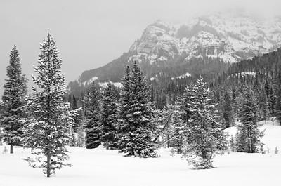 Yellowstone_00020597bw