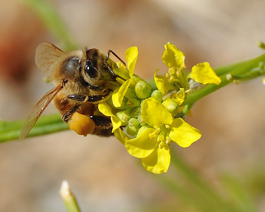 bees_up_close_07242010-002