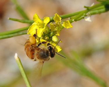 bees_up_close_07242010-003