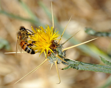 bees_up_close_07242010-006