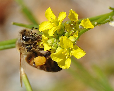 bees_up_close_07242010-001