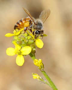 bees_up_close_07242010-004