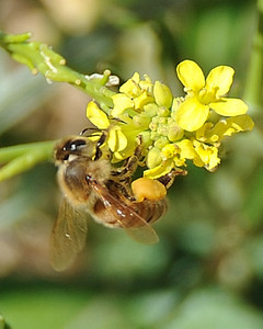 bees_up_close_07242010-015